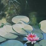 Seerose Lotus