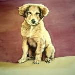 Tierportrait Hundewelpen