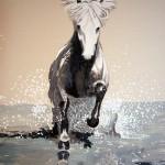 Isländer Pferd Pony