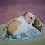 Jack russel Hundeportrait Terrier Welpe