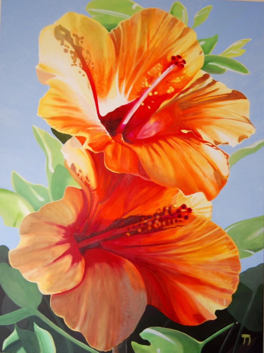 Hibiskus Orange