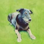Hundeportrait Hund Tierportrait