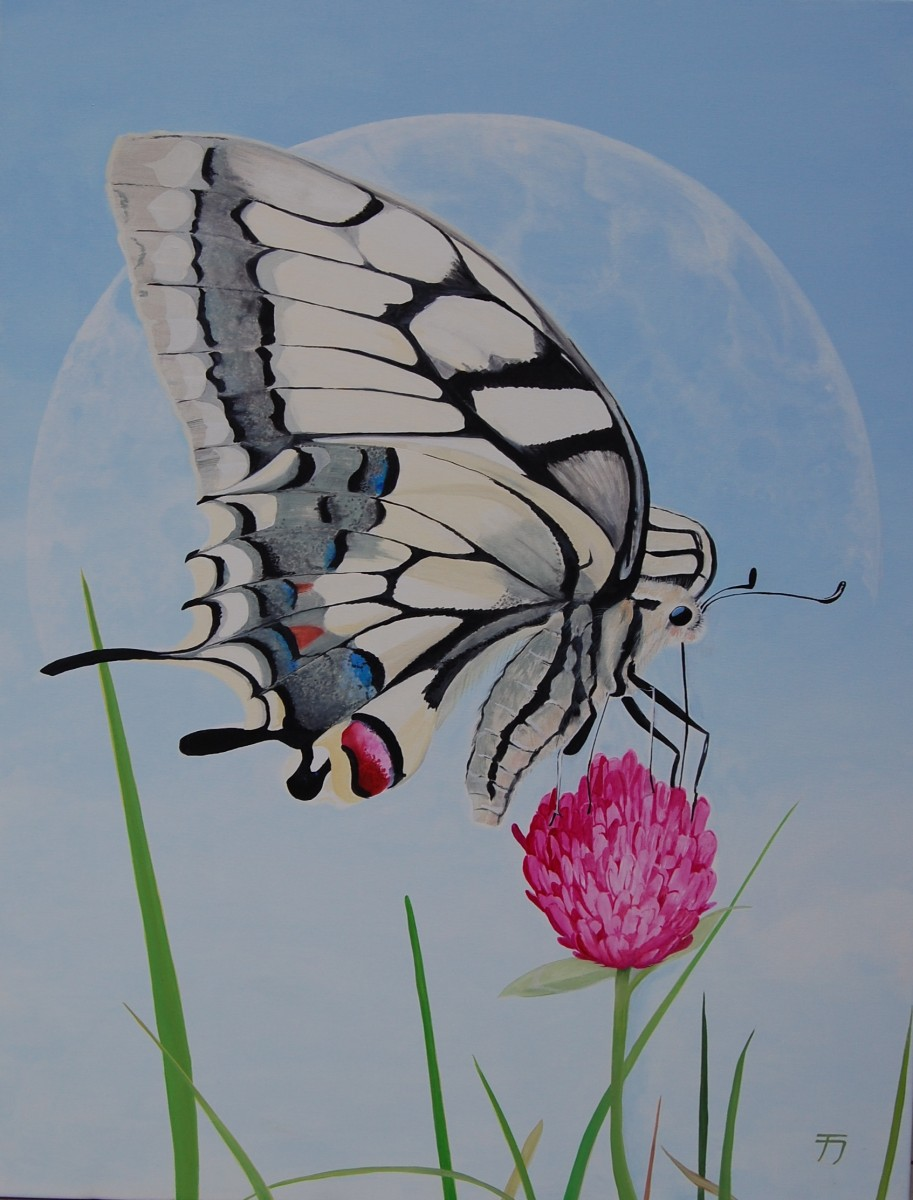Papillo