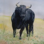 Stier Toro